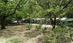 dogwood-festival-2014-atlanta-ga-14